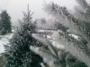 frosty-spruce-gallery